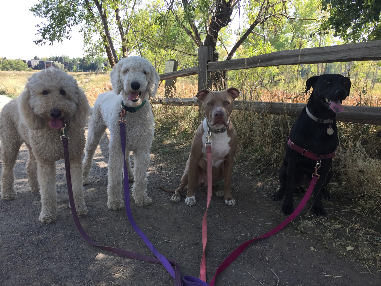 Zoey, Imogene, Rey, Poppy