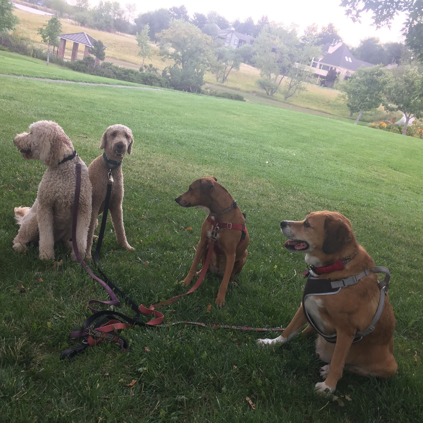 Zoey, Milo, Mamacita, Cooper
