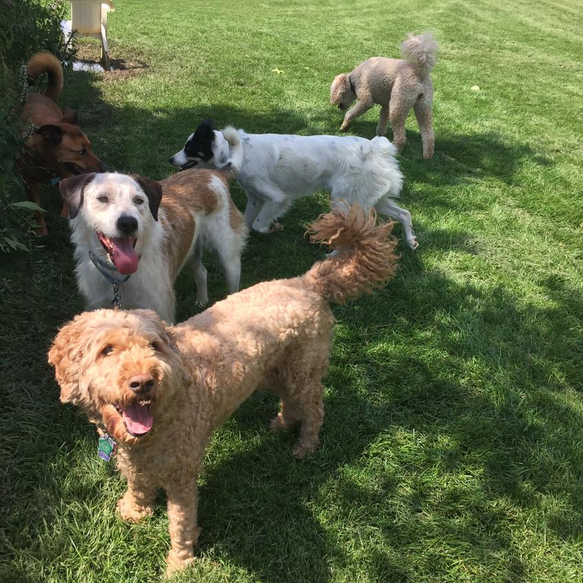 Ruby,Griff,RogerRoger,friend,Zoey