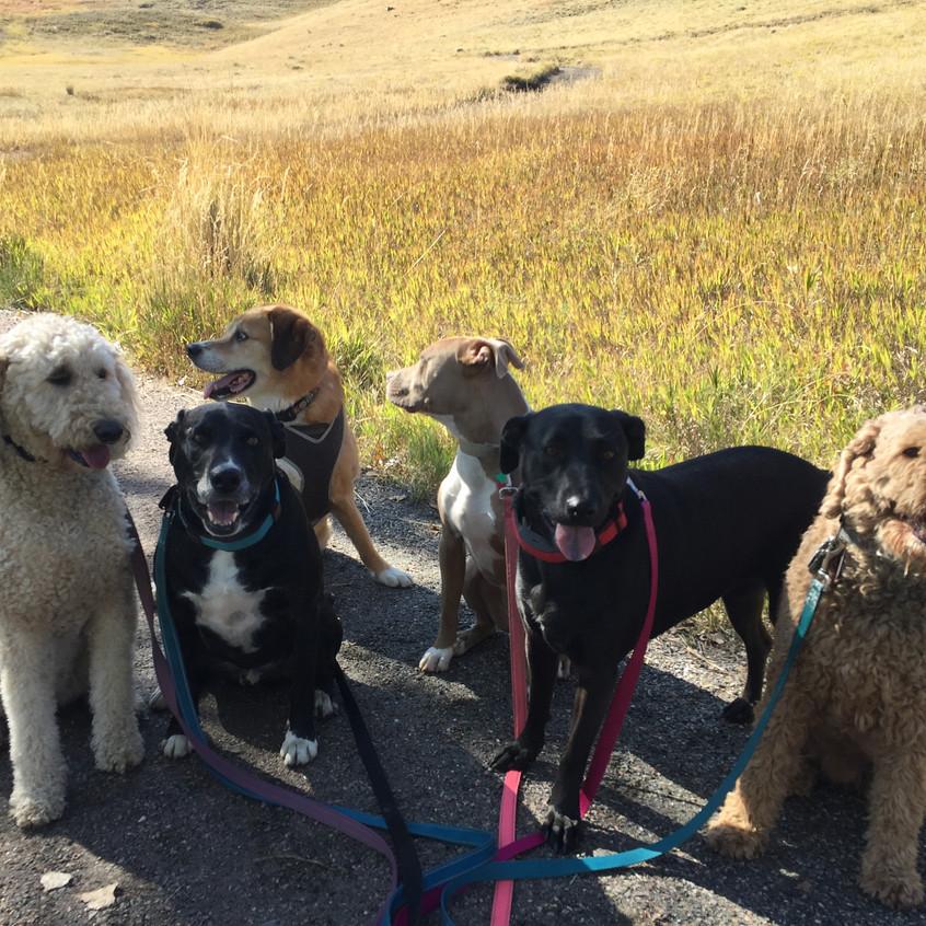 Zoey,Dylan,Cooper,Rey,Poppy,RogerRog