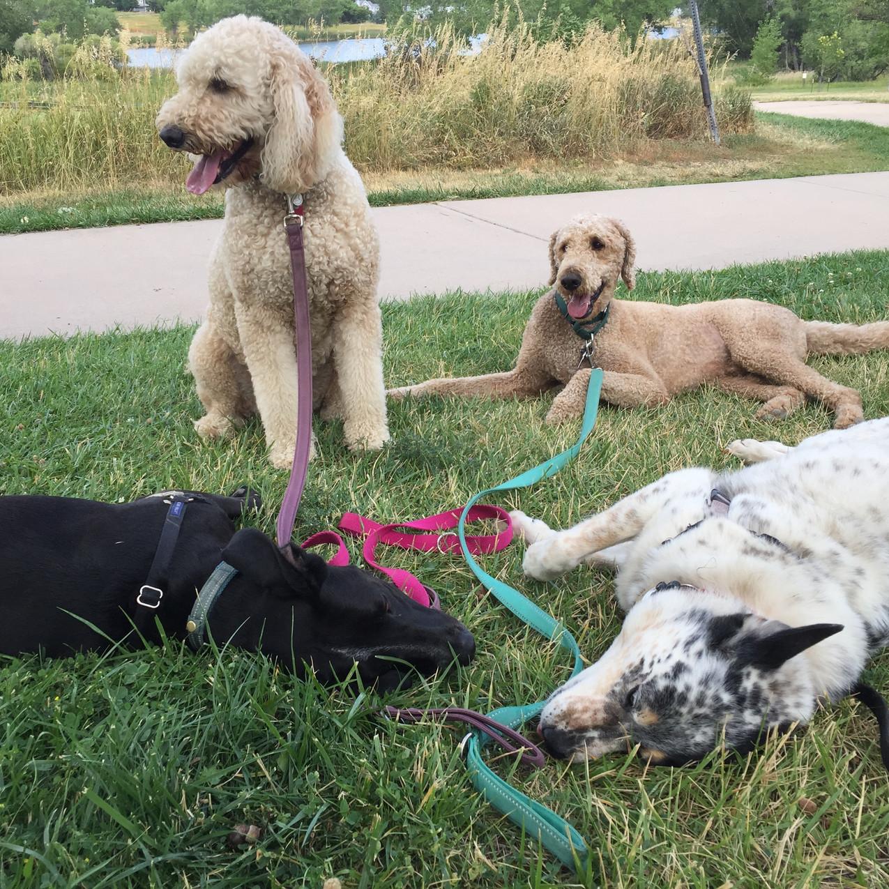 Avo, Zoey, Milo, Isaac