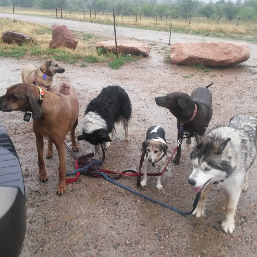 Benny,Colby,Ruffers,Stella,Coco,T