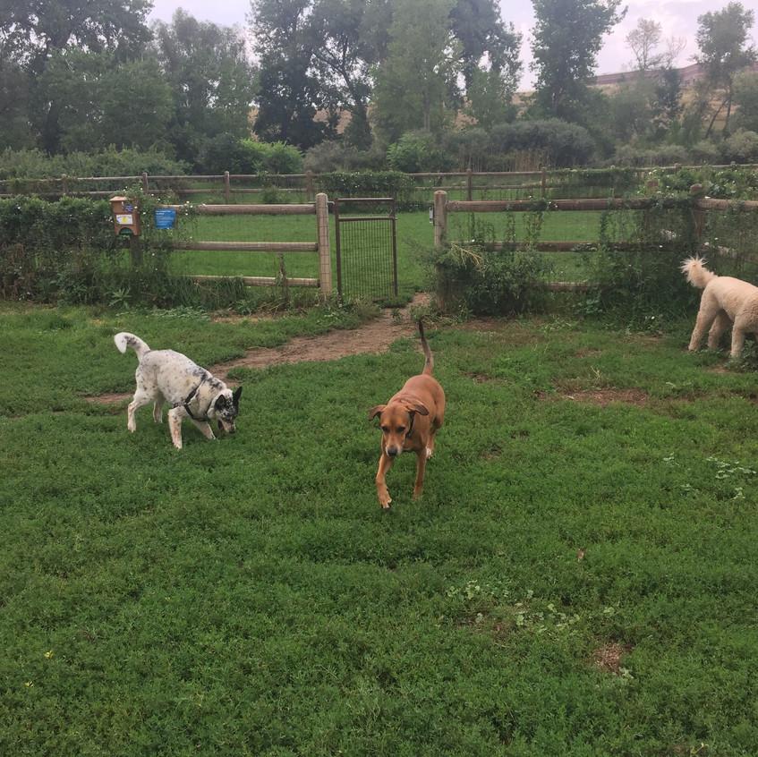 Isaac, Mamacita, Zoey