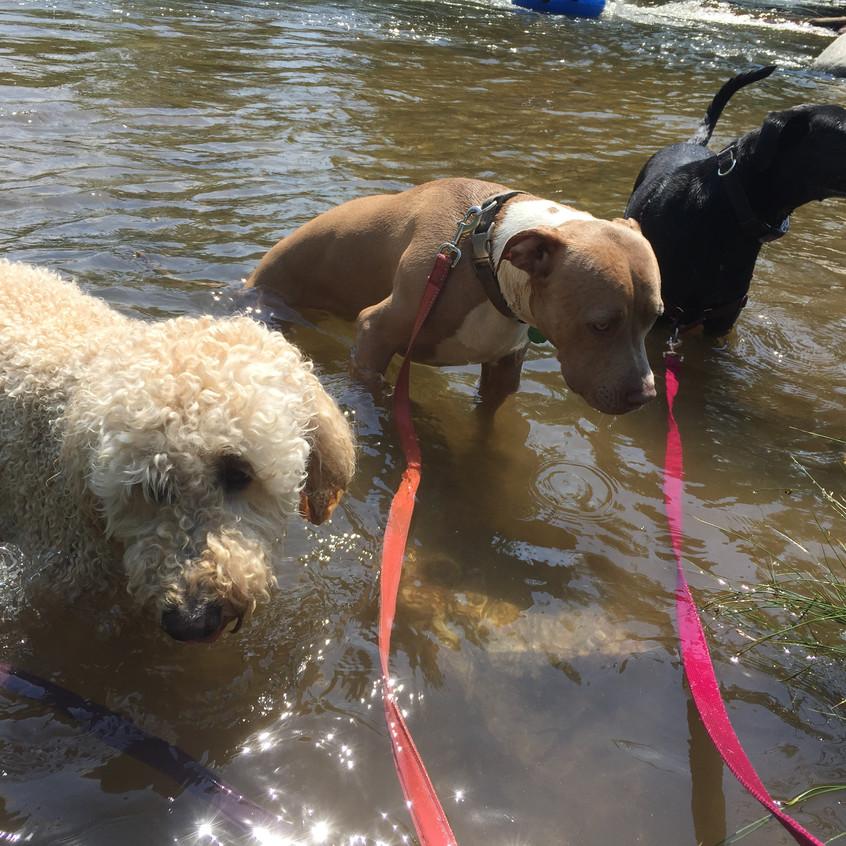 Zoey, Rey, Poppy