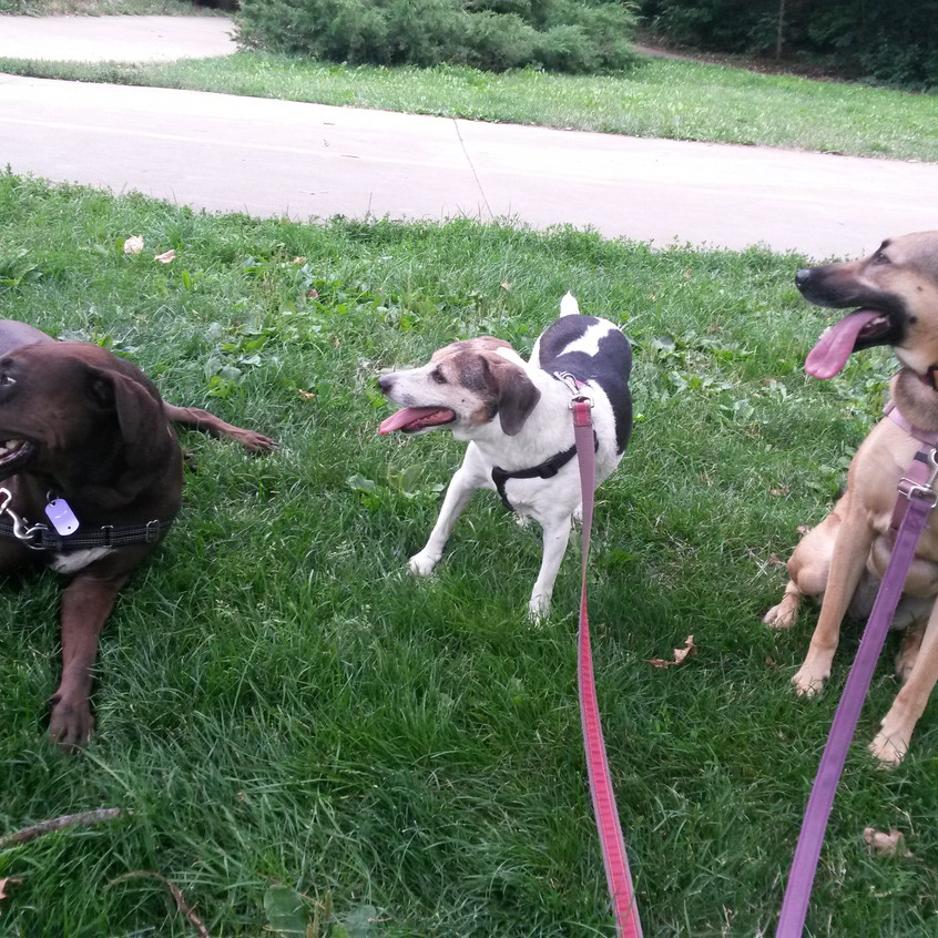 Coco, Stella, Colby