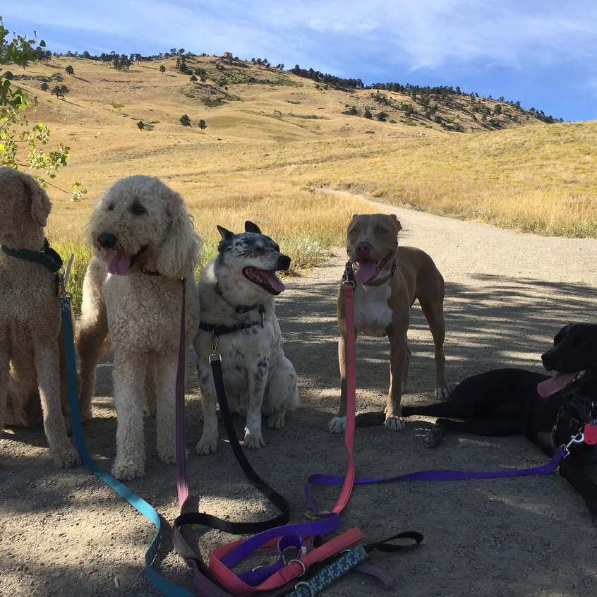 Milo, Zoey, Isaac, Rey, Avo