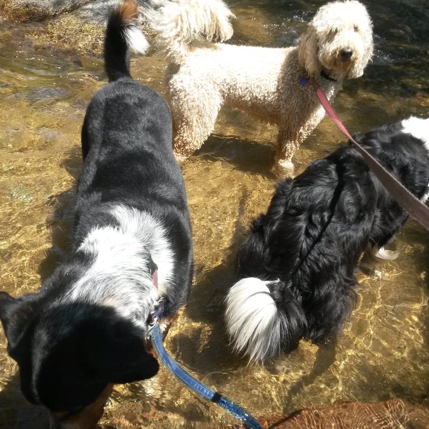 Sputnik, Zoey, Ruffers