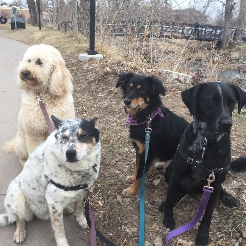 Zoey, Isaac, Riley, Avo