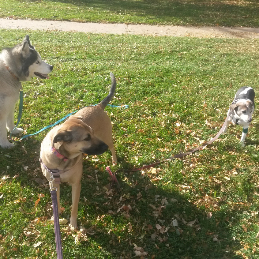Thompson, Colby, Stella