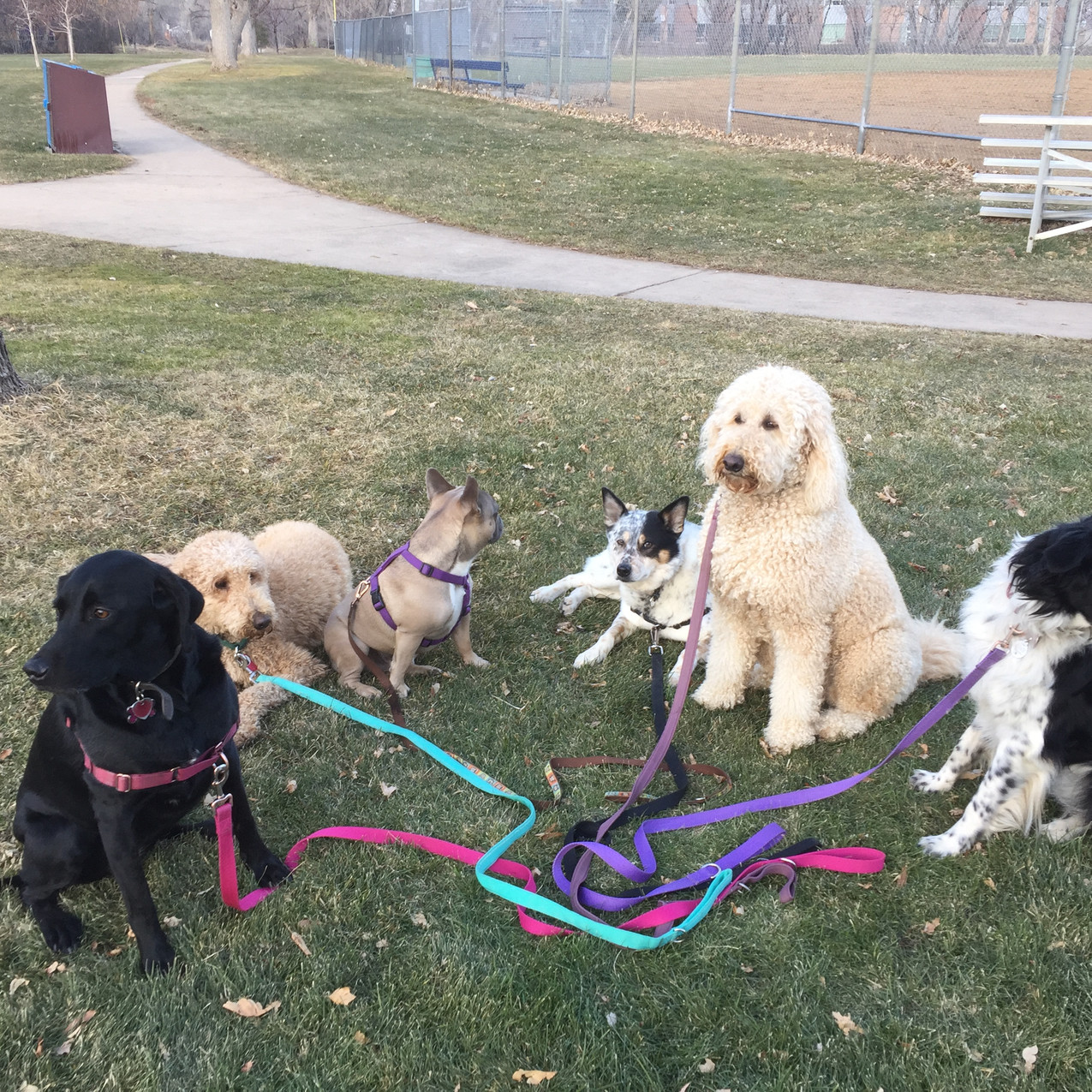 Racer,Milo,Blu,Isaac,Zoey,Ruffers