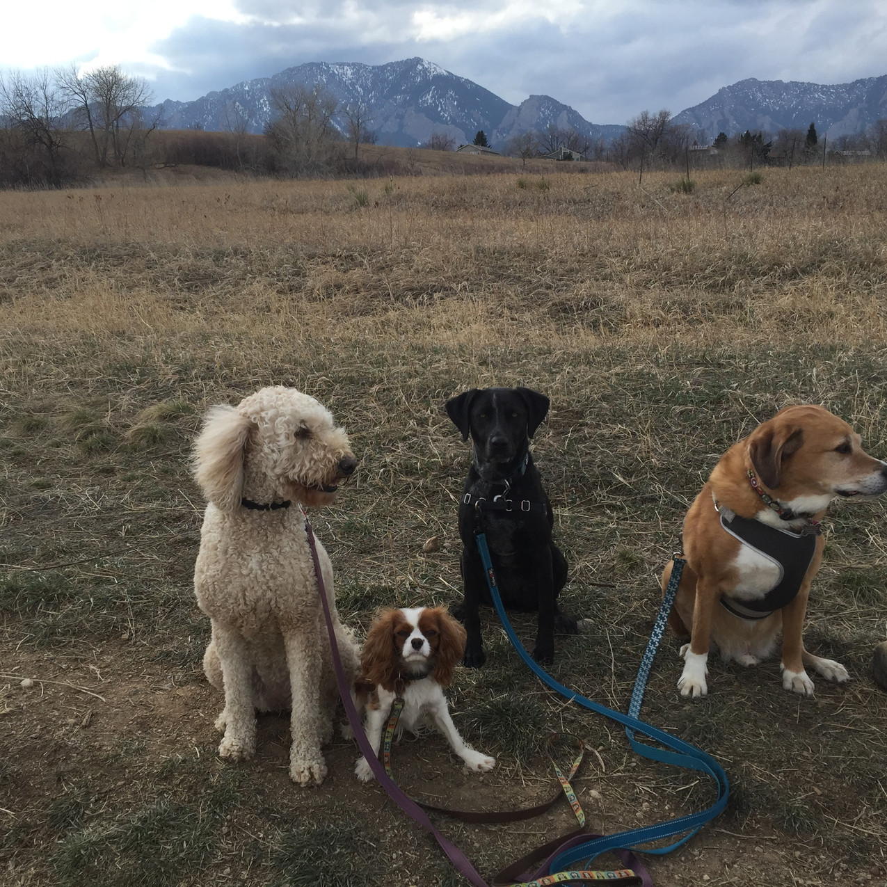 Zoey, Zoe, Avo, Cooper