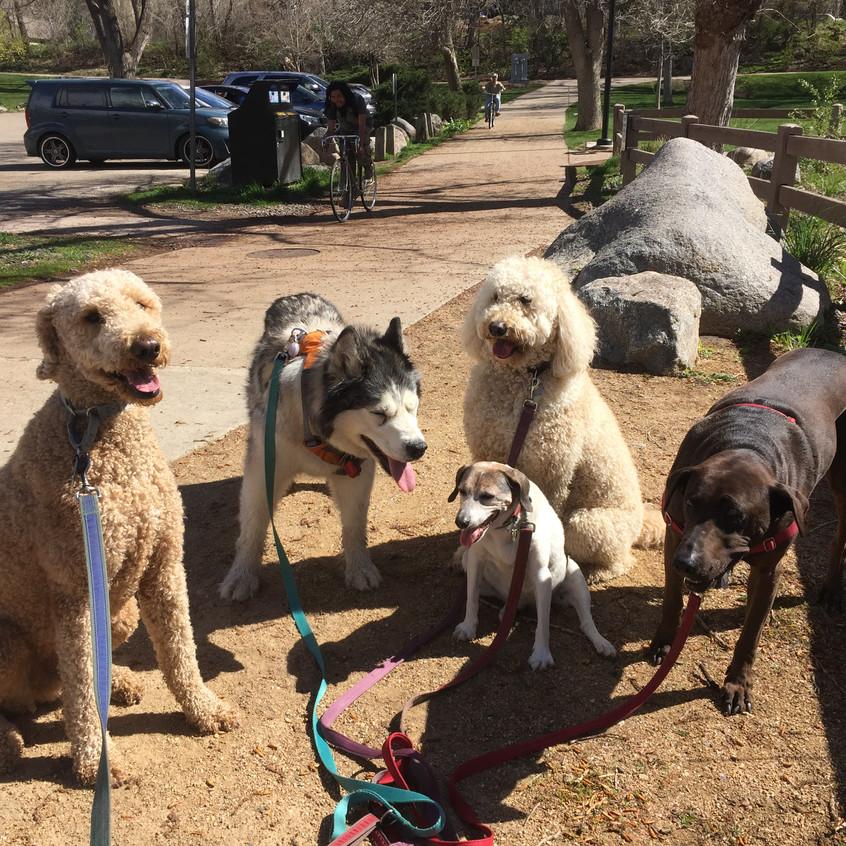 Milo, Thompson, Stella, Zoey, Coco