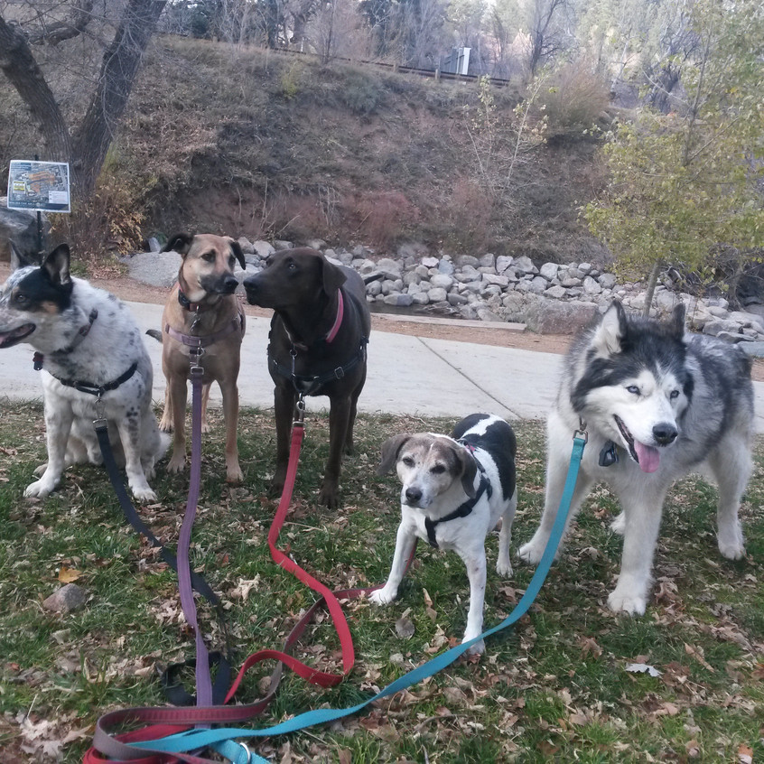 Isaac, Colby, Coco, Stella, Thompson