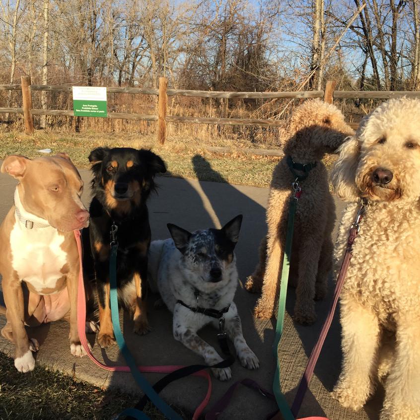 Rey, Riley, Isaac, Milo, Zoey