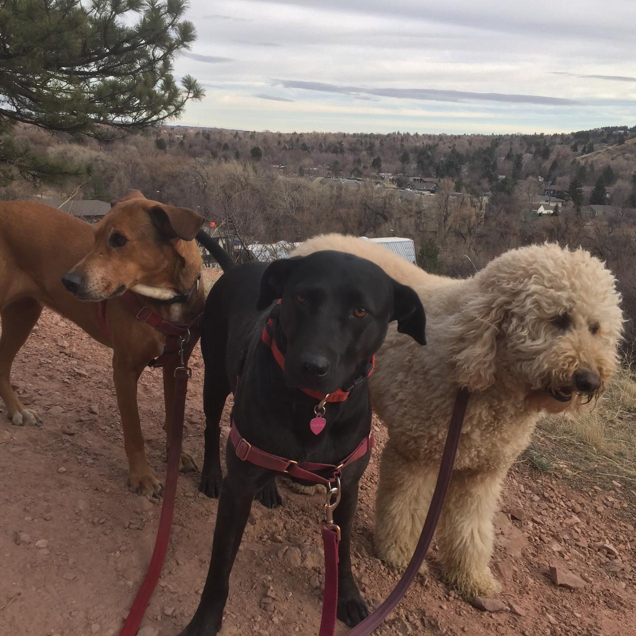 Mamacita, Poppy, Zoey