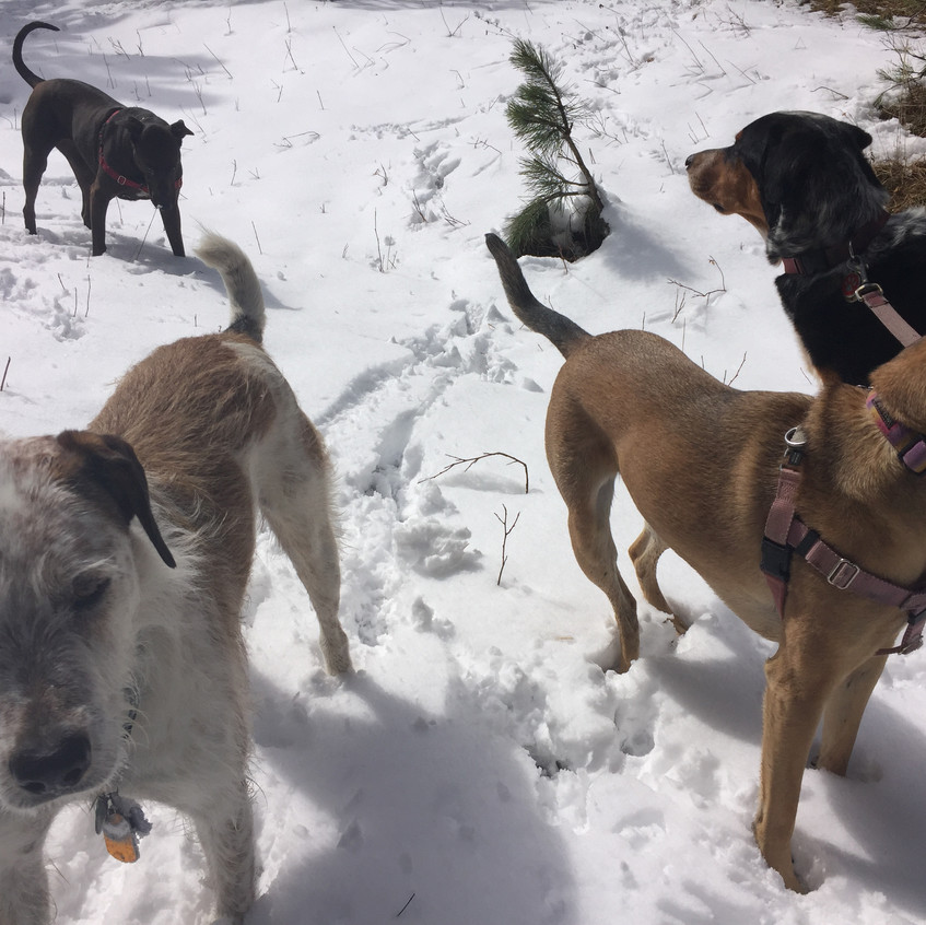Griff, Coco, Colby, Sputnik