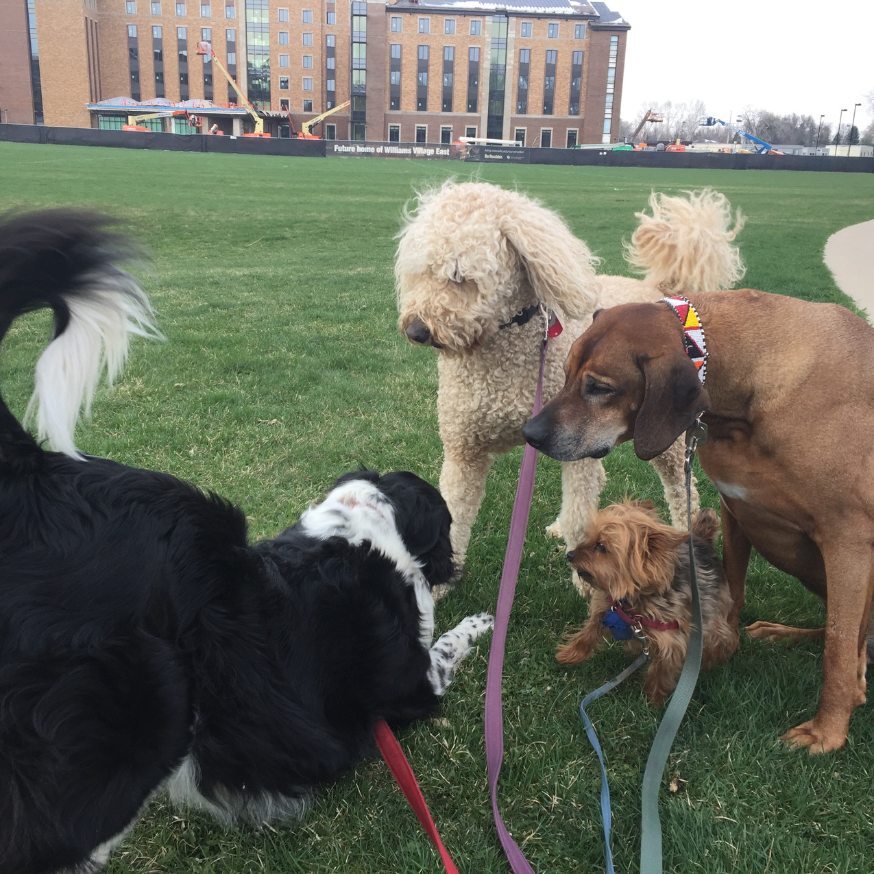 Ruffers, Zoey, Oliver, Benny