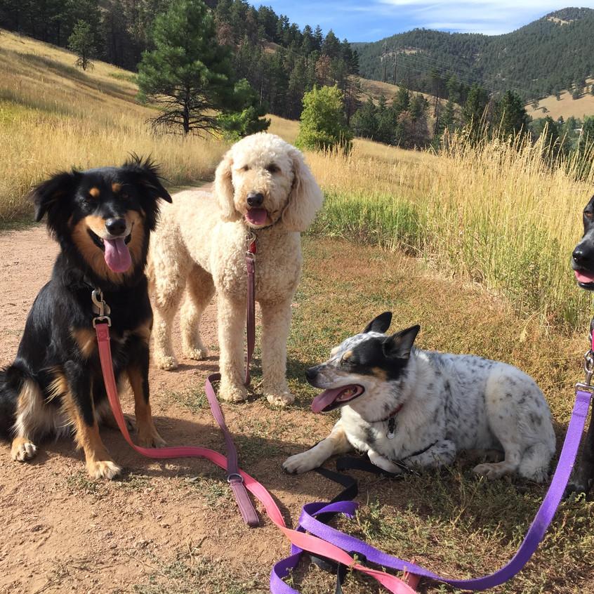 Riley, Zoey, Isaac, Avo