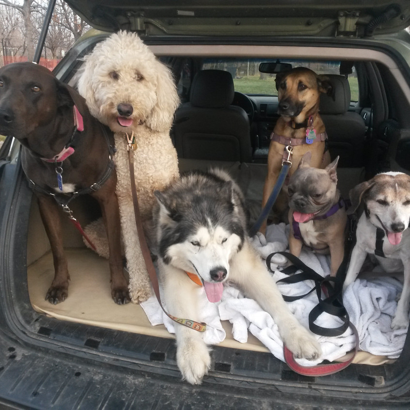 Coco, Zoey, T, Colby, Blu, Stella