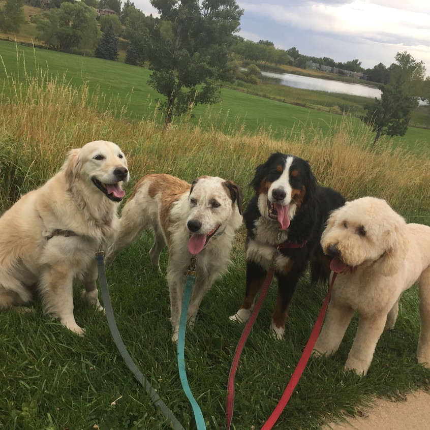 Clover, Griff, Monarch, Zoey