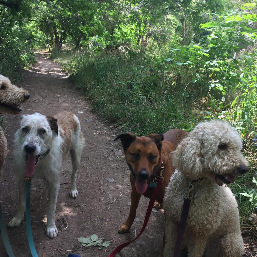 Milo, Griff, Ruby, Zoey