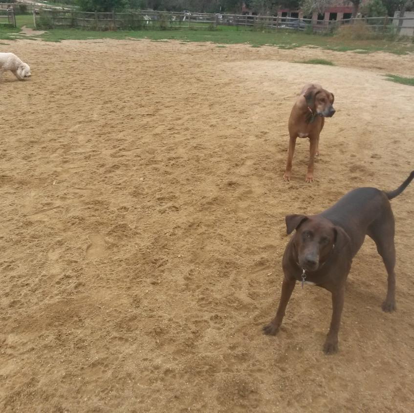 Zoey, Benny, Coco