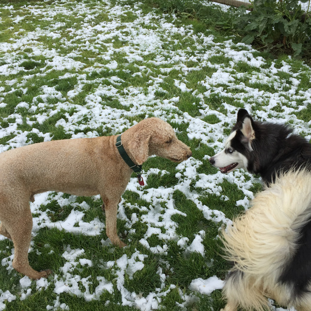 Milo, Husky friend