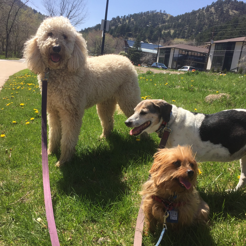 Zoey, Stella, Oliver