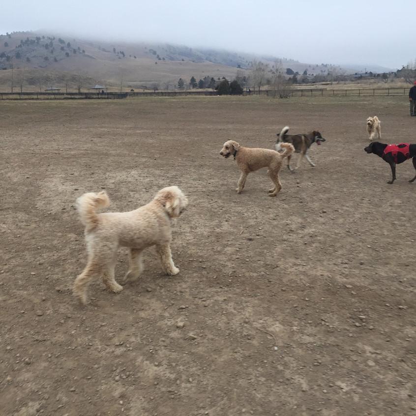 Zoey, Milo, friends, Coco