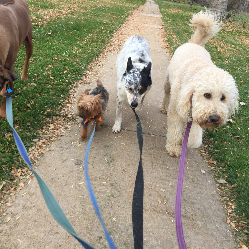 Benny, Oliver, Isaac, Zoey