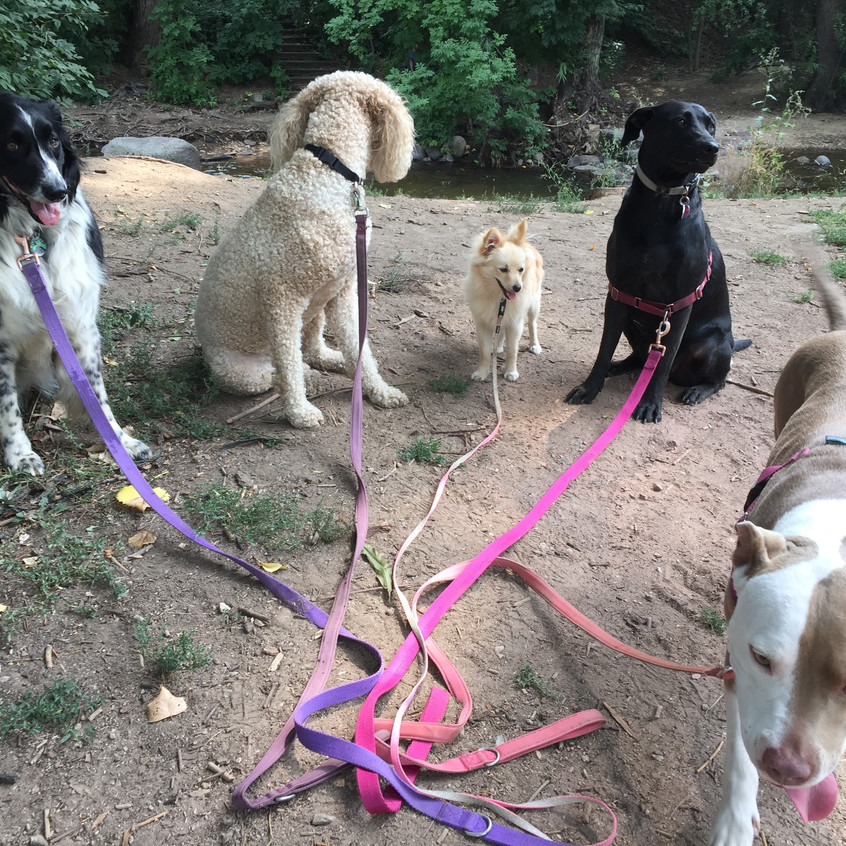 Ruffers, Zoey, Gidget, Poppy, Lou