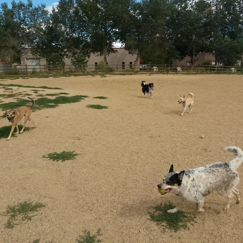 Colby, Ruffers, Isaac, friend