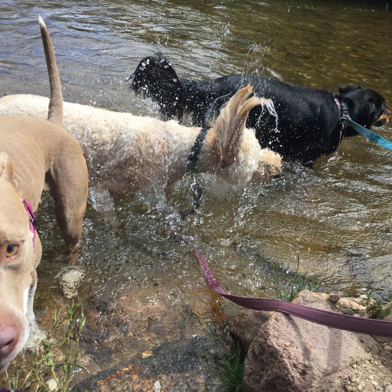 Lou, Zoey, Riley, Gidget