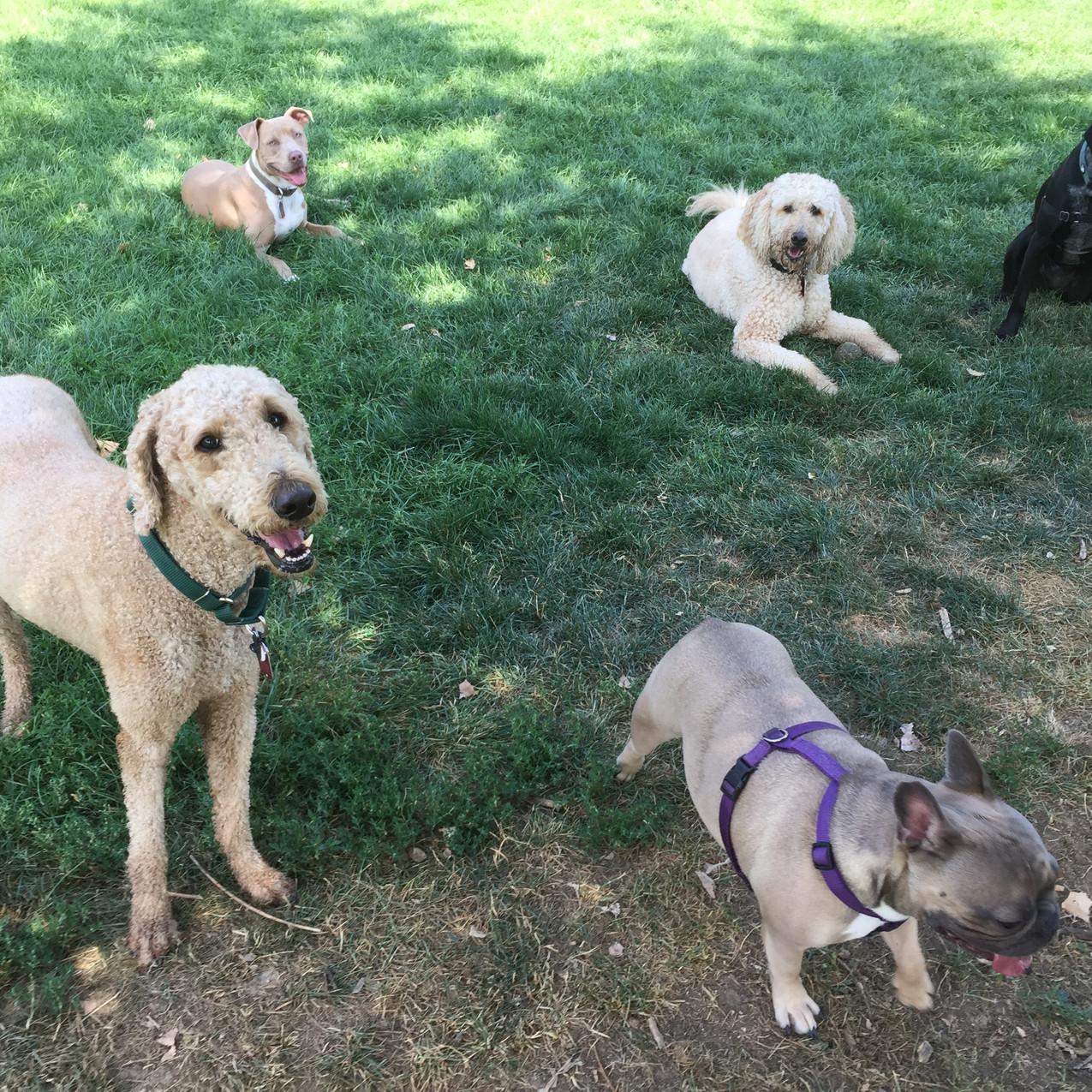 Milo, Rey, Blu, Zoey, Avo