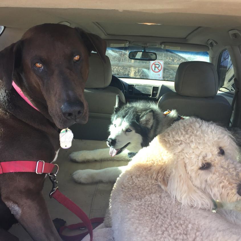 Coco, Thompson, Zoey