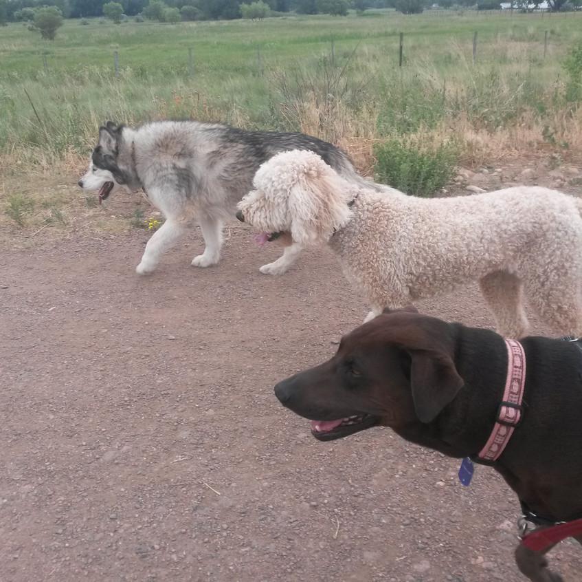 Thompson, Zoey, Coco