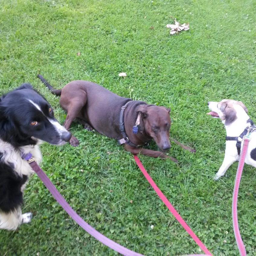 Ruffers, Coco, Stella