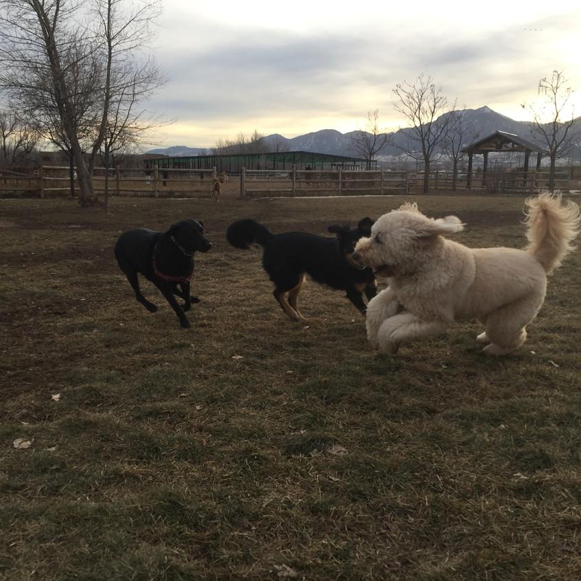 Poppy, Riley, Zoey