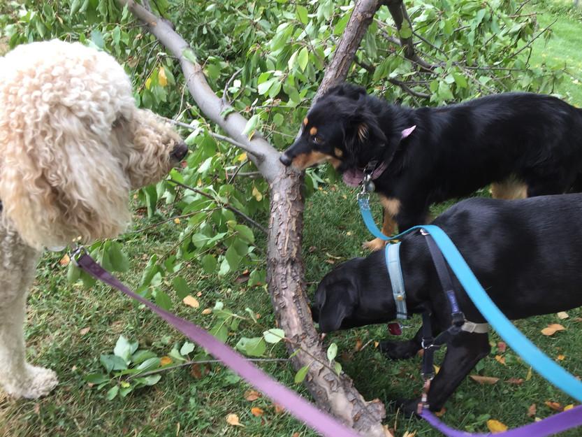 Zoey, Riley, Avo