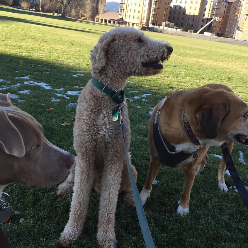 Rey, Milo, Cooper