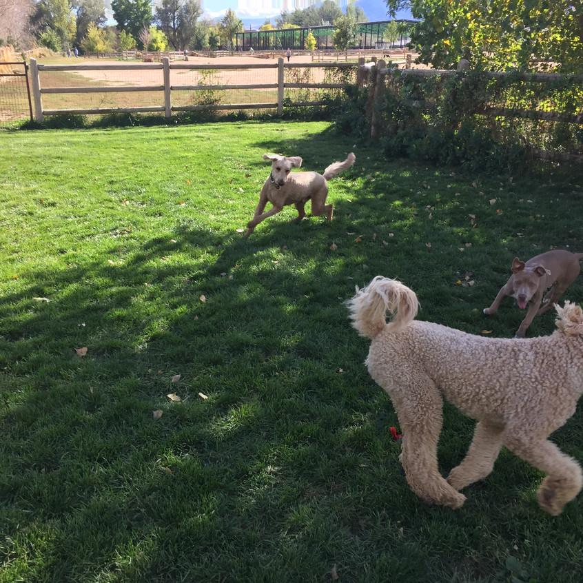 Milo, Zoey, Rey