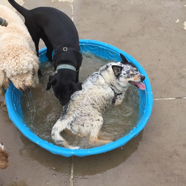 Zoe, Zoey, Avo, Isaac