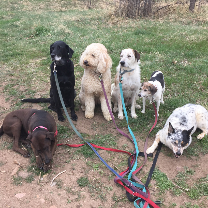 Coco,Yoda,Zoey,Griff,Stella,Isaac