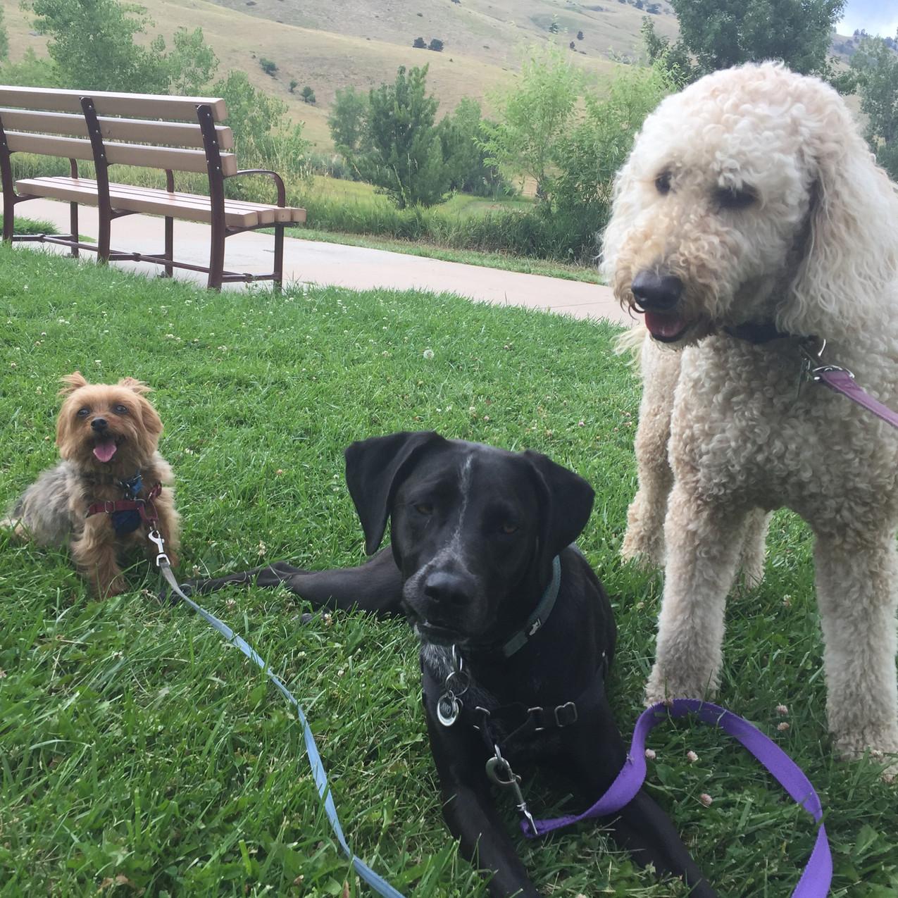 Oliver, Avo, Zoey
