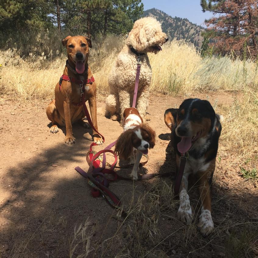 Mamacita, Zoey, Zoe, Sputnik