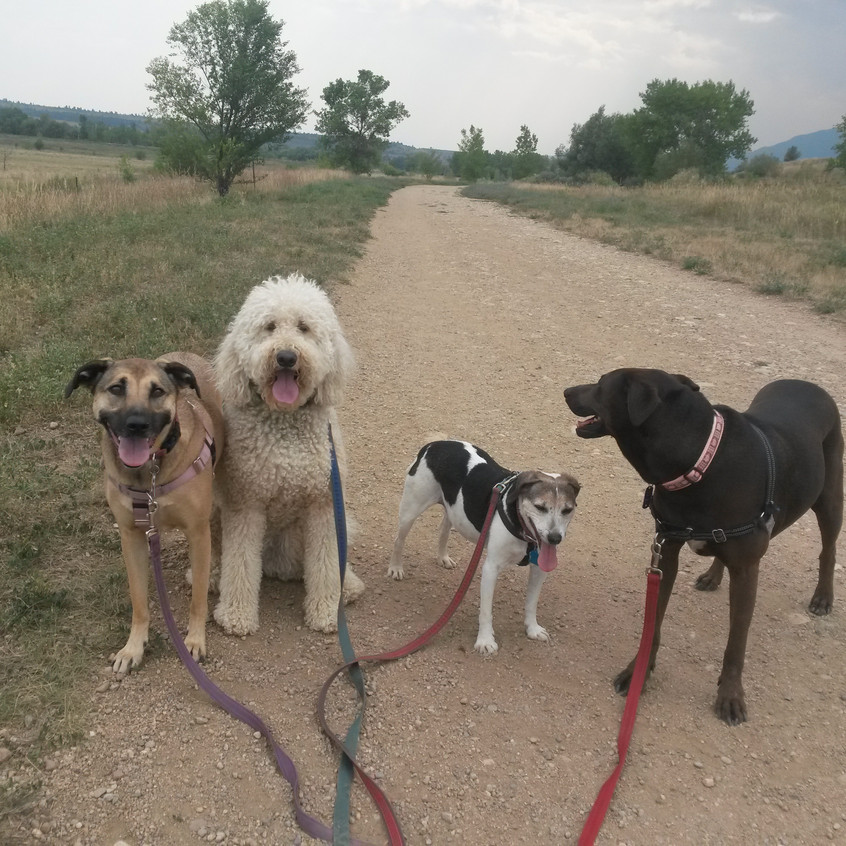 Colby, Zoey, Stella, Coco