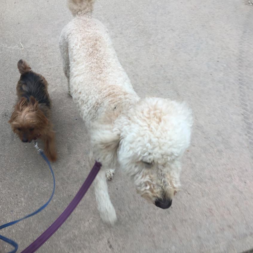 Oliver, Zoey