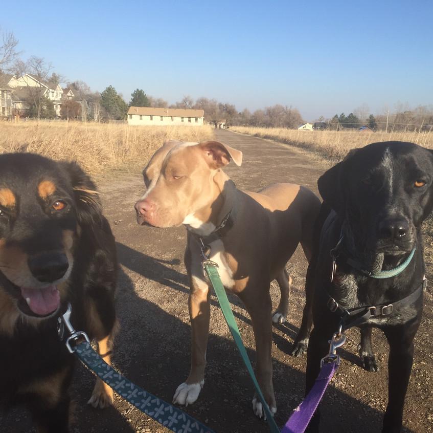 Riley, Rey, Avo