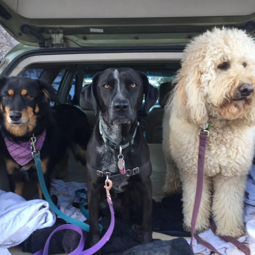 Riley, Avo, Zoey