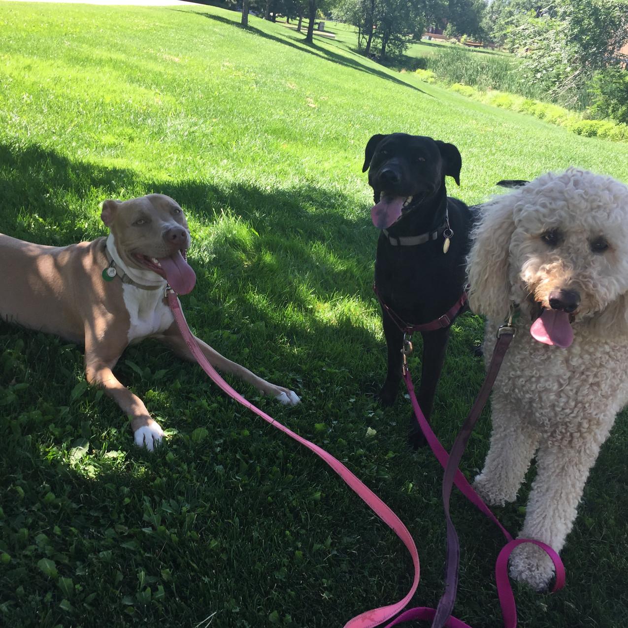Rey, Poppy, Zoey